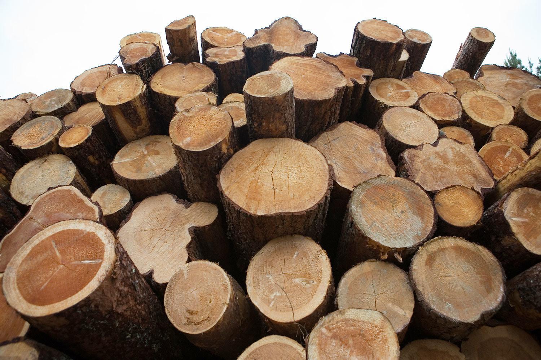 Экспорт редких деревьев на Дальнем Востоке резко вырос